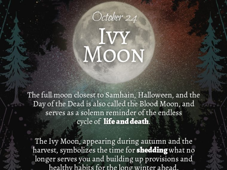ivy moon preview