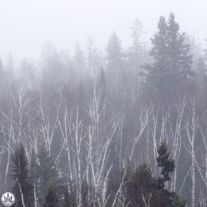 Cabin Fever Playlist