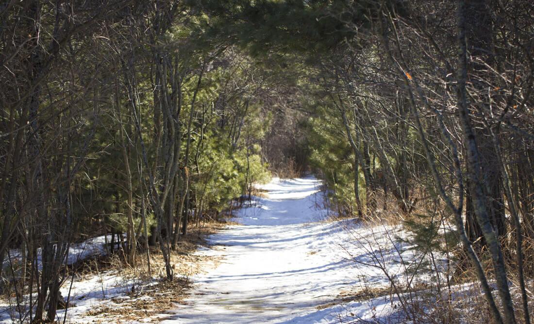 Blog v necks - Into the Forest
