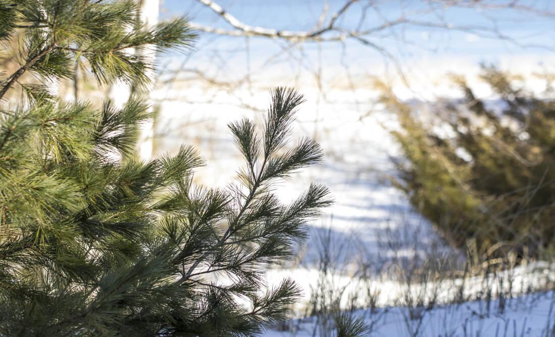 Blog v necks7 - Into the Forest