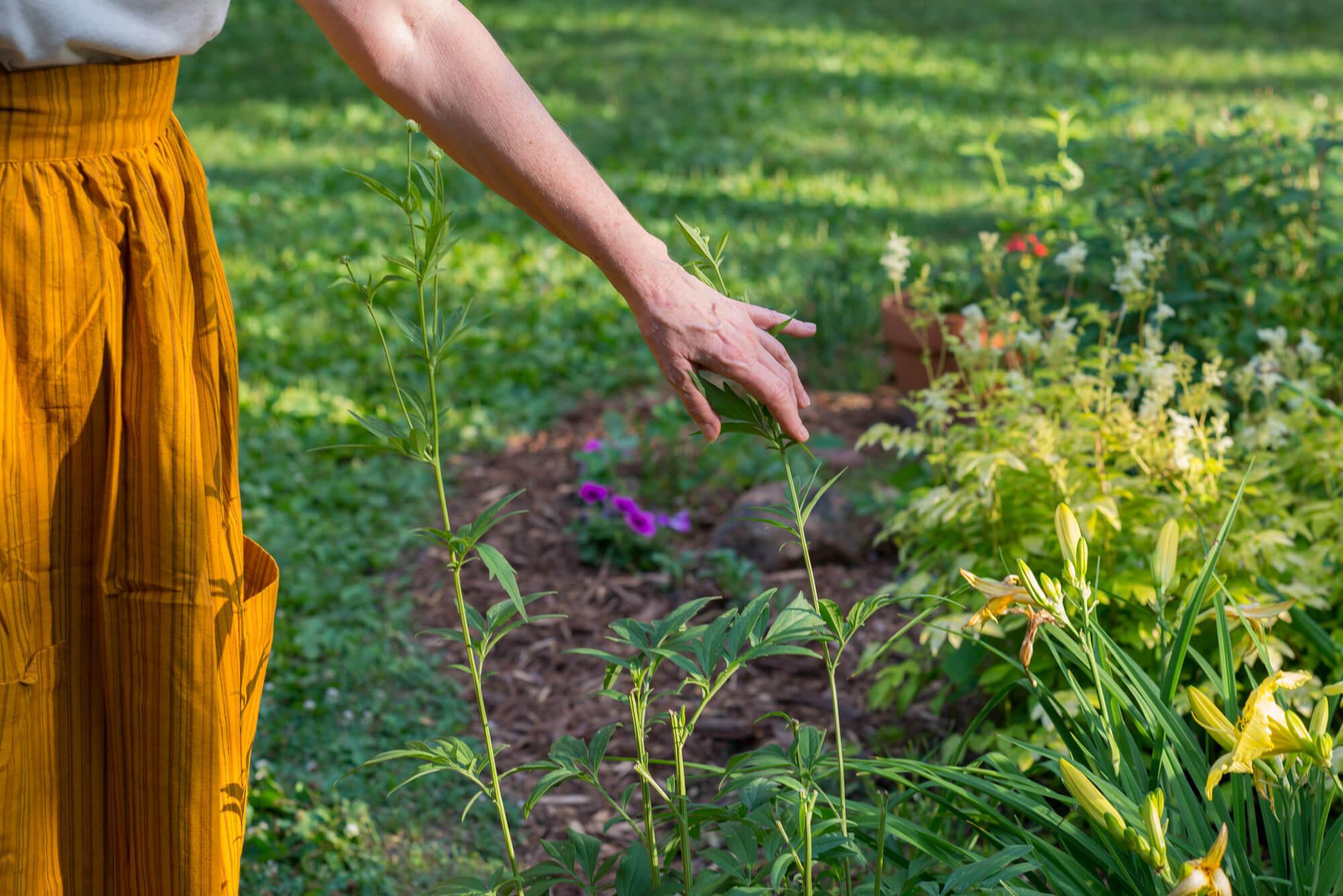 JosieLaura 2020 036 - A Walk in the Garden