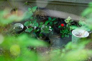 JosieLaura 2020 080 300x200 - A Walk in the Garden