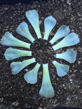 Life in Leaves - Soul Flower Blog