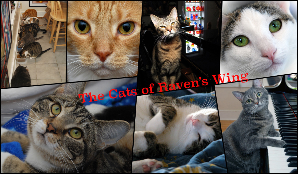 The Cats of Raven's Wing - Soul Flower Blog
