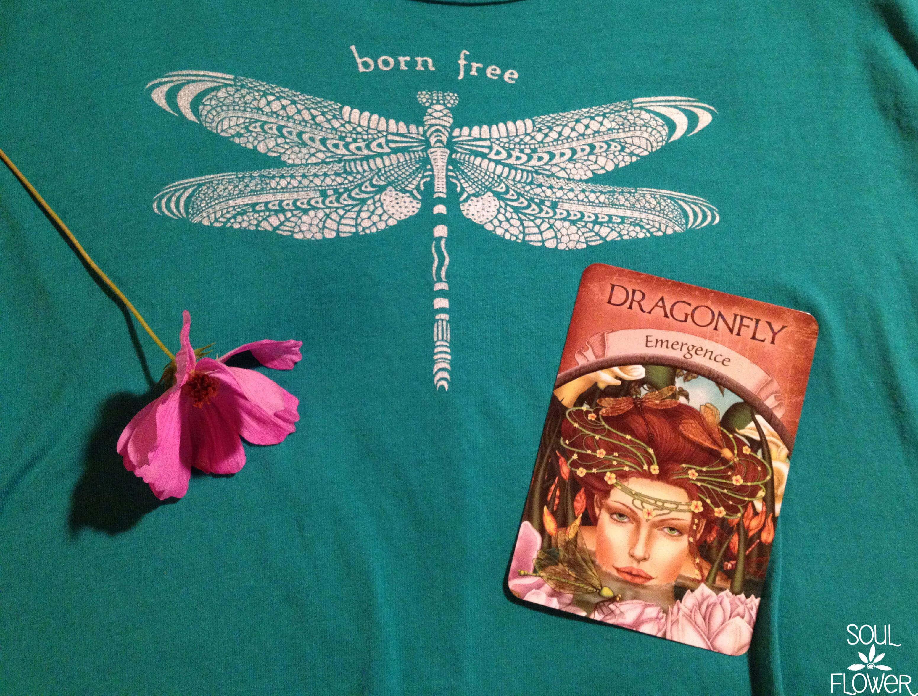 dragonfly medicine 3
