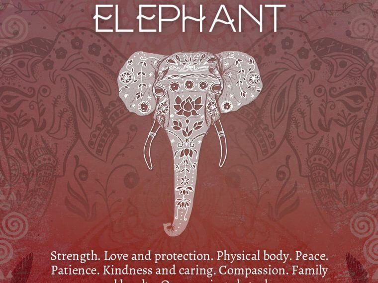 elephant 1 760x570 - Elephant Symbolism - Elephant Spirit Animal