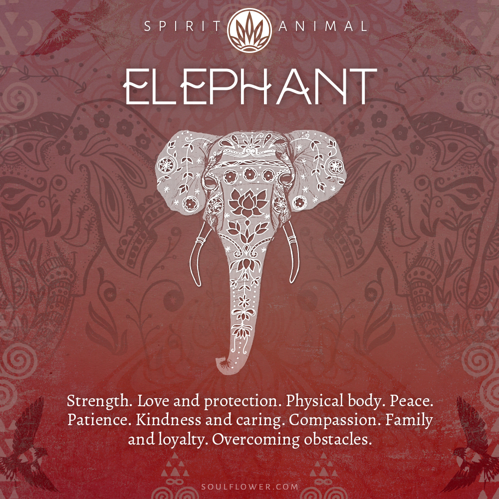 Elephant Symbolism - Elephant Spirit Animal