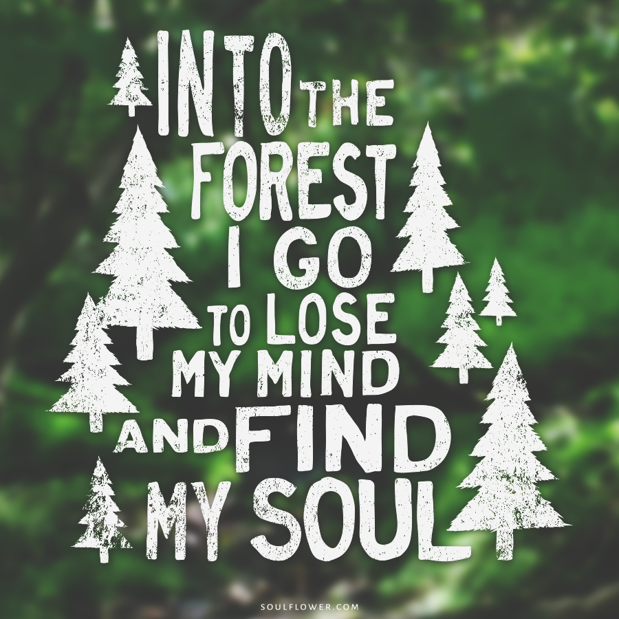 forest 1 - Positive Quotes (Inspiration, Move Me Brightly!)