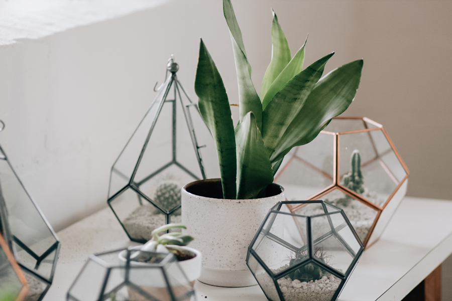 geometric terrariums - Platonic Solids Meaning - Sacred Geometry