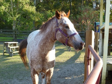 horse - Therapeutic Horseback Riding: Kindness Matters