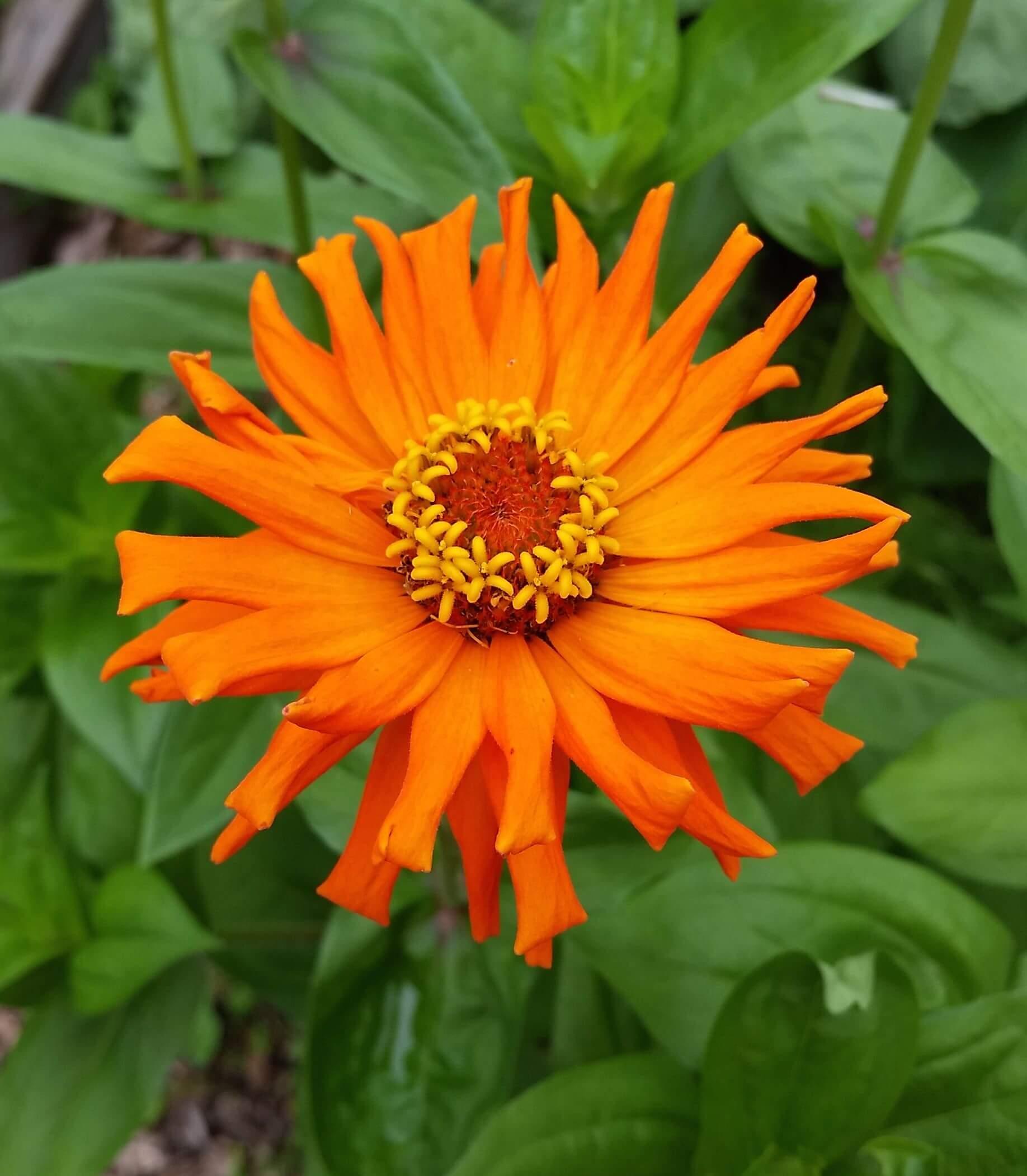 Tend Your Garden - Soul Flower Blog