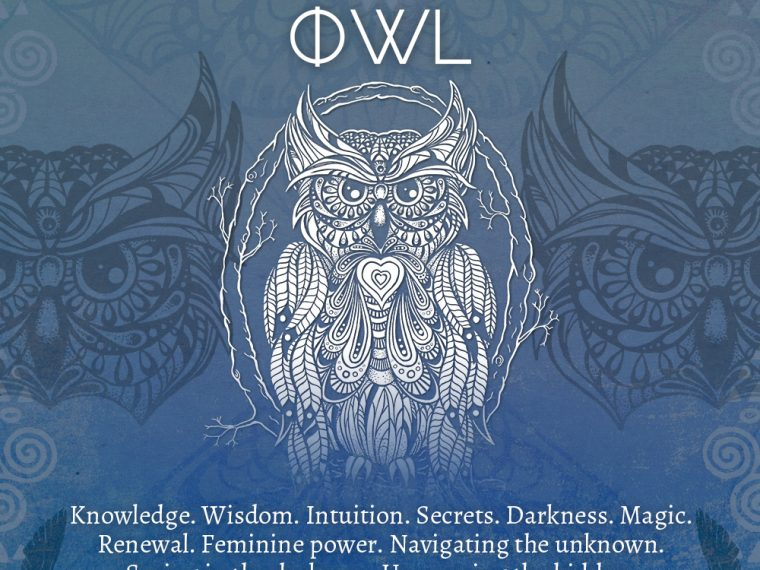 owl 760x570 - Owl Symbolism - Owl Spirit Animal