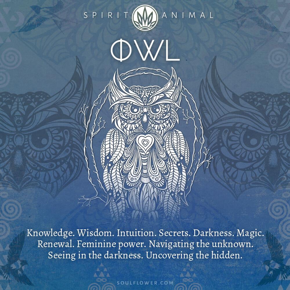owl - Find Your Spirit Animal - Spirit Animal Meaning
