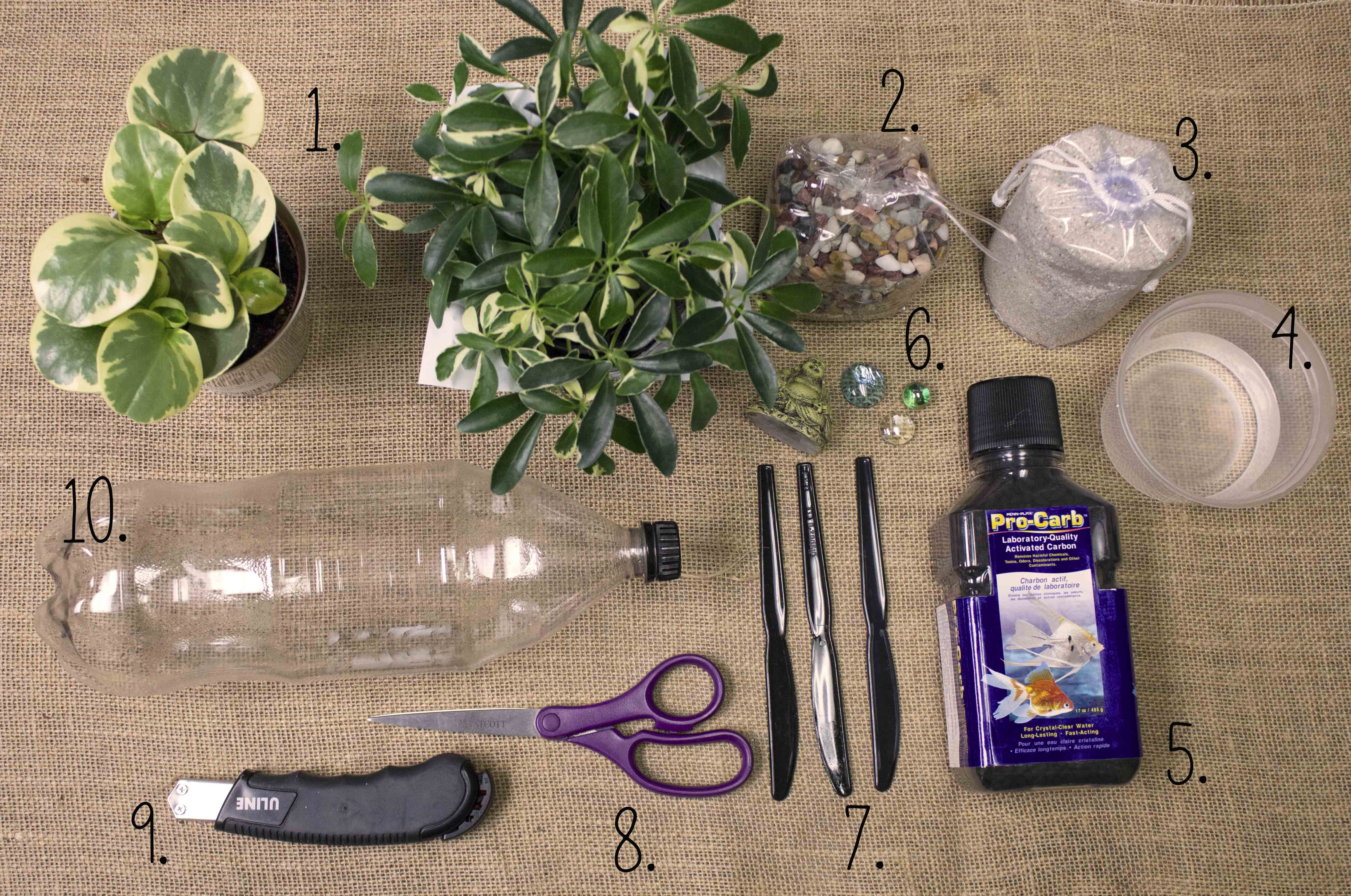 DIY: Recycled Soda Bottle Terrarium - DIY: Recycled Soda Bottle Terrarium