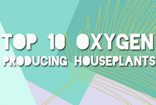 title 1 640x430 - Top 10 Oxygen Producing Houseplants