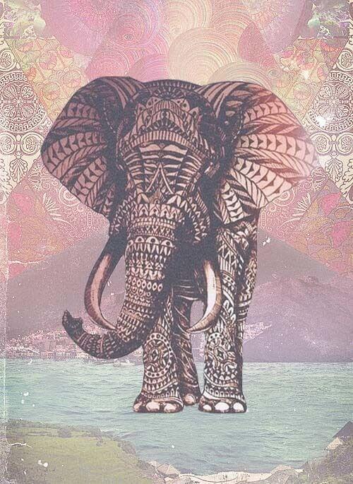 top pins feb 16 elephant