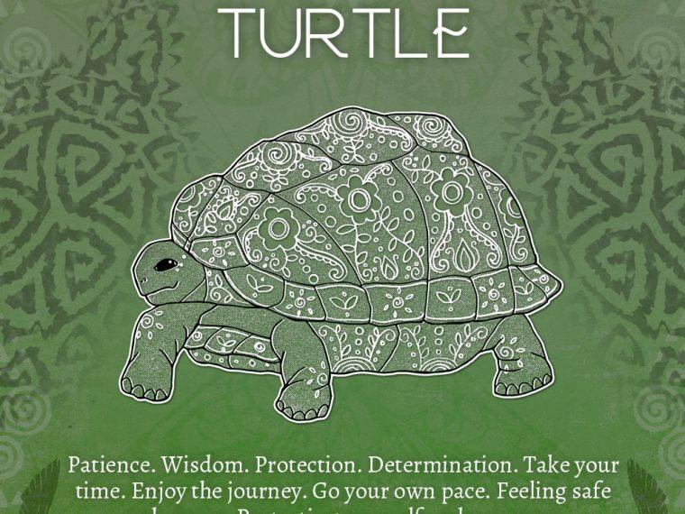 turtle 760x570 - Turtle Symbolism - Turtle Spirit Animal