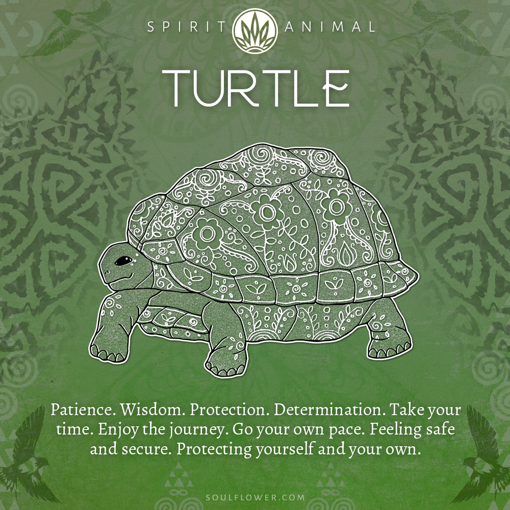 Turtle Symbolism - Turtle Spirit Animal
