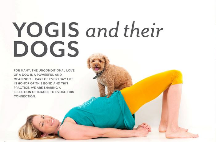 yogis and dogs